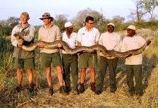 African Rock Python care of Khamai Reptile Park