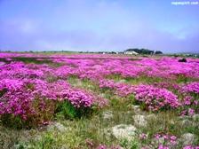 namaqualand's spectacular desert flower show!