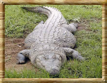 Up close & friendly with living dino's at Croc Worls (KwaZulu-Natal province)