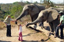 Educational Interaction with Elephants at the Hazyview Elephant Sanctuary
