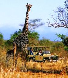 Take a game drive on the wild side in the Pilanesberg National Park (North West province near Sun City)