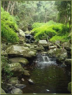 Tsitsikama Forest walk or ride