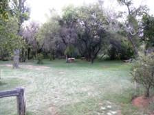 Indigenoius_Bush_Gardens